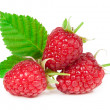 Raspberries isolated on white background — Stock Photo