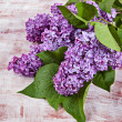 Stock Photo: Flowers lilac on the old boards