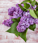 Flowers lilac on the old boards — Stock Photo