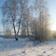 Winter landscape with snow — Stock Photo #13493906