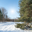 Winter landscape with fir trees — Stock Photo #13493925