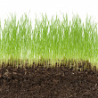 Green grass in soil isolated on white background — Stock Photo #25022853