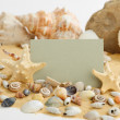 Holiday greeting card with shells and place for text — Stock Photo