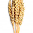Grain ears isolated over white background — Stock Photo