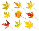 Foglie d'autunno raccolta isolato su sfondo bianco — Foto Stock