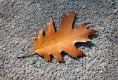 Foglia di quercia di autunno. sul marciapiede — Foto Stock