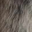 Polar fox fur texture — Stock Photo