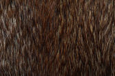 Closeup of beautiful polar Fox fur. Useful as background — Stock Photo