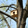Wooden birdhouse on the tree — Stock Photo