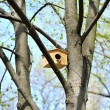 Wooden birdhouse on the tree — Stock Photo #24571197