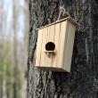 Wooden birdhouse on the tree — Stock Photo #24574601