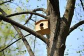 Wooden birdhouse on the tree — Stock Photo