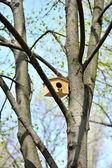 Houten birdhouse op de boom — Stockfoto
