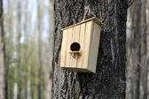 Dřevěný holubník na stromě — Stock fotografie