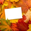 Autumn leaves and white sheet background — Stock Photo