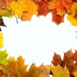 Stock Photo: Frame composed of colorful autumn leaves