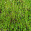 Green Grass Background — Stock Photo #46116713
