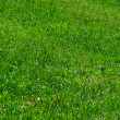 Green grass background — Stock Photo #6035326