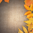 Stock Photo: Autumn Greeting Card