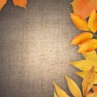 Autumn Greeting Card — Stock Photo