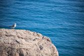 Pájaro en la roca — Foto de Stock