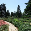 Stock Photo: Botanical Garden