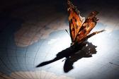 Motyl na mapie miasta — Zdjęcie stockowe