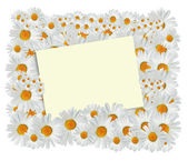 Daisy Greeting Card — Stock Photo