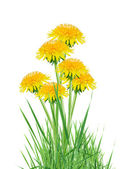 Dandelions In Grass — Stock Photo