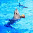 ストック写真: Dolphin Playing With Ball
