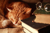 Cat And Books — Stock Photo
