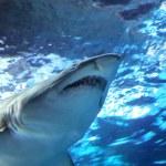 Shark Under Water — Stock Photo
