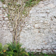 Tree On The Wall — Stock Photo