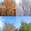 Four Seasons — Stock Photo #46496175