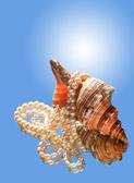 貝殻および真珠 — ストック写真