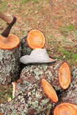 Firewood Splitting — Stockfoto