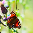 Butterfly — Stock Photo #24434529