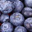 Stock Photo: Bilberry