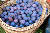 Plums in the basket — Stock Photo