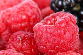 Blackberry and raspberries macro — Stock Photo