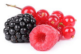 Berries on white — Stock Photo