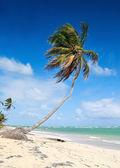 παλάμες σε τροπική παραλία — Φωτογραφία Αρχείου
