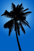 Silhouette of coconut palm isolated on blue background — Stock Photo