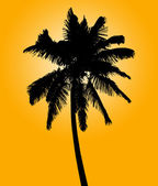 Silhouette of coconut palm — Stock Photo