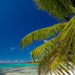 A beautiful image of caribbean beach — Stock Photo #13703101