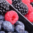Bog bilberries, raspberry and blackberry — Stock Photo #13703587