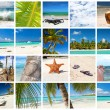 Tropical collage - Stock Photo