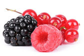 Berries isolated on white — 图库照片