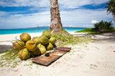 多くのビーチに落ちているココナッツ — ストック写真