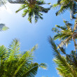 Top of palm trees — Stock Photo